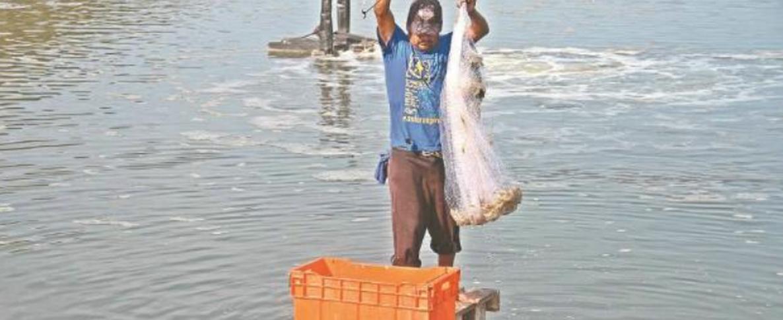 Crece productividad acuícola