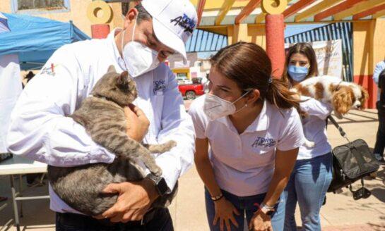 """Unen esfuerzos """"Toño"""" Astiazarán y asociaciones de protección de animales"""