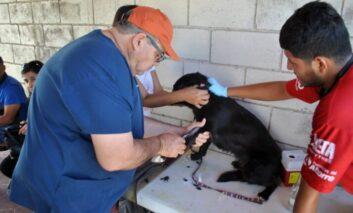 Llama Centro de Atención Canina y Felina a proteger a gatos y perros con vacuna antirrábica